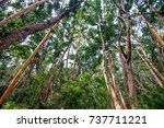 scenic view of rainforest with... | Shutterstock . vector #737711221