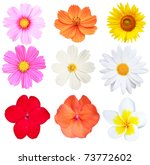 Stock photo flower isolated on white background 73772602