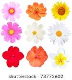 Stock photo flower isolated on white background 73772602
