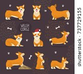 Adorable Welsh Corgi Dogs With...