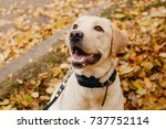 dog with electric shock collar... | Shutterstock . vector #737752114