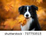 adorable autumn portrait of... | Shutterstock . vector #737753515