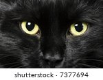 Stock photo domestic animals close up of cat eyes 7377694