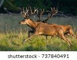 red deer   rutting season   Shutterstock . vector #737840491