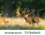 red deer   rutting season | Shutterstock . vector #737840665