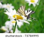 Butterfly  Scarce Swallowtail...