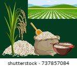 rice harvest concept. set of... | Shutterstock .eps vector #737857084