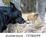 a black lab and a small... | Shutterstock . vector #73786099