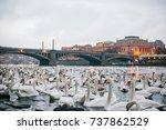swans swim along the river in... | Shutterstock . vector #737862529