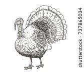 hand drawn vector illustration... | Shutterstock .eps vector #737865034