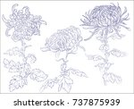 elegant decorative... | Shutterstock .eps vector #737875939
