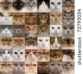 collage of 36 cat heads | Shutterstock . vector #73795054
