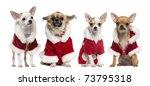 Four Chihuahuas Wearing Santa...