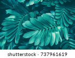 Tropical Jungle Foliage  Natur...