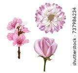 mona lisa flower  dahlia flower ... | Shutterstock .eps vector #737986234