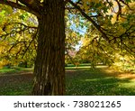 Small photo of Color outdoor nature fall photo of a park taken under an american storax tree with yellow and green leaves on a sunny autumn day with blue sky