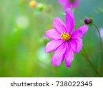 inspirational springtime image... | Shutterstock . vector #738022345