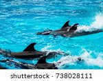 dolphins swimming on their... | Shutterstock . vector #738028111