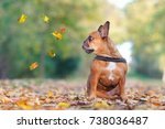dog in autumn park with falling ... | Shutterstock . vector #738036487