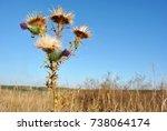 silybum marianum  cardus... | Shutterstock . vector #738064174