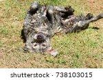 Muddy Dog Rolling