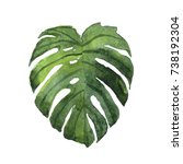 monstera leaf illustration | Shutterstock . vector #738192304