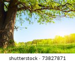 spring meadow with big tree... | Shutterstock . vector #73827871