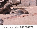 indian porcupines are sleeping | Shutterstock . vector #738298171