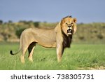 Small photo of Lion king