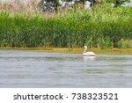 danube delta fauna  pelican ... | Shutterstock . vector #738323521