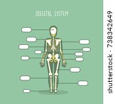 human anatomical skeleton vector | Shutterstock .eps vector #738342649