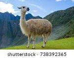a white llama  lama glama  ... | Shutterstock . vector #738392365