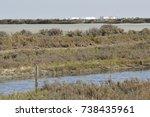 landscapes of marshes  birds... | Shutterstock . vector #738435961