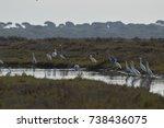 landscapes of marshes  birds... | Shutterstock . vector #738436075