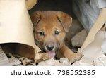 Stock photo homeless puppy 738552385
