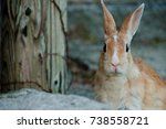 Stock photo cute wild bunny rabbits in japan s rabbit island okunoshima 738558721