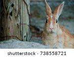 cute wild bunny rabbits in... | Shutterstock . vector #738558721