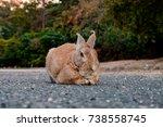 Stock photo cute wild bunny rabbits in japan s rabbit island okunoshima 738558745