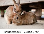 Stock photo cute wild bunny rabbits in japan s rabbit island okunoshima 738558754
