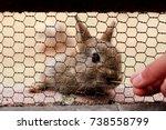 Stock photo cute wild bunny rabbits in japan s rabbit island okunoshima 738558799