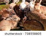 Stock photo cute wild bunny rabbits in japan s rabbit island okunoshima 738558805