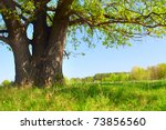 Spring Meadow With Big Tree...