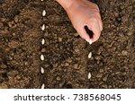 top view hand planting pumpkin... | Shutterstock . vector #738568045