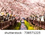 cherry blossoms dangling on top ... | Shutterstock . vector #738571225