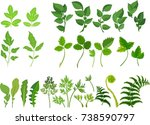 set of green compound leaves on ... | Shutterstock .eps vector #738590797