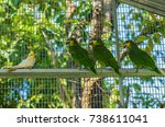 cute tropical birds in an... | Shutterstock . vector #738611041