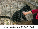 Small photo of petting the black Panther across the line