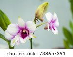 beautiful orchids in the garden. | Shutterstock . vector #738657391