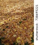 Small photo of Autumn leaves (sycamore tree - Platanus occidentalis) fallen on the ground useful as a background