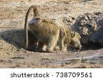 baboon drinking | Shutterstock . vector #738709561
